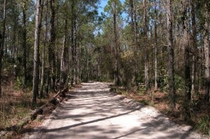 Entry road to Princess Place Preserve, Palm Coast, Florida