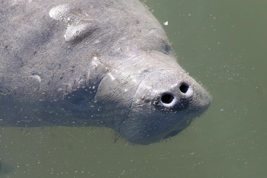 About - See Manatees