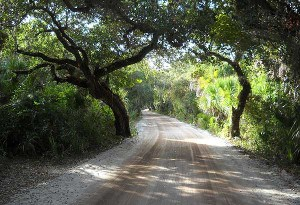 The road on Cayo Costa