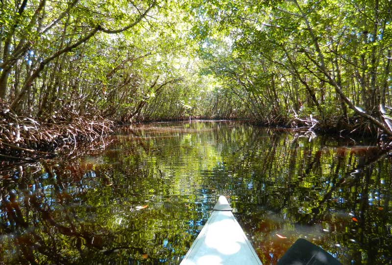 Collier Seminole State Park Kayak Trail Camping Near