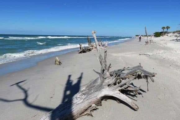 Gulf Island Beach Combing Trees