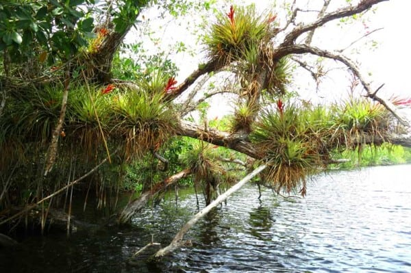 Everglades kayak trail: Halfway Creek off Tamiami Trail is all about the plants