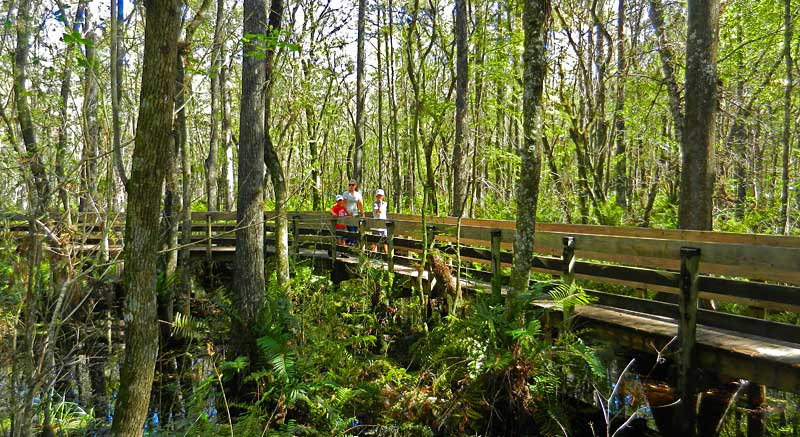 Six Mile Cypress Slough Preserve: Free, wild & five minutes off I-75